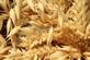 Haver, gepeld - Avena sativa 100 gram
